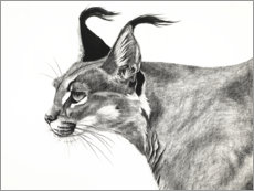 Wall sticker  Caracal in the wind - Rose Corcoran