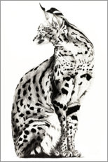 Gallery print  Looking back Serval - Rose Corcoran
