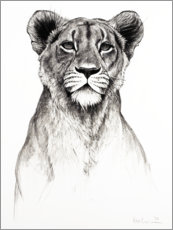 Gallery print  Attentive lioness - Rose Corcoran