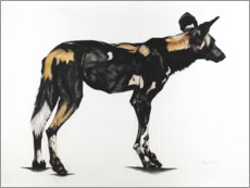 Foam board print  Great African Wild Dog II - Rose Corcoran