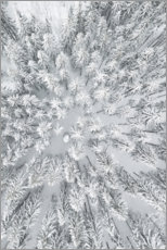 Canvas print  Snowy FORESTS - Studio Nahili