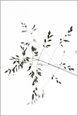 Canvas print  Blade of grass in the wind - Studio Nahili