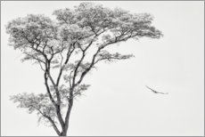Foam board print  Lonely tree and eagle - Piet Flour