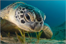 Canvas print  Portrait of a turtle - Dmitry Marchenko