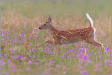Wood print  Fawn in the field - Nick Kalathas