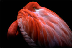 Gallery print  Timid flamingo - Ilias Nikoloulis