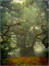 Canvas print  Gnarled branches in the fairytale forest - Anke Butawitsch