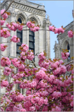 Canvas print  Cherry blossoms in front of Notre Dame - Carina Okula