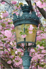 Wall sticker  Lantern with cherry blossoms in Paris - Carina Okula