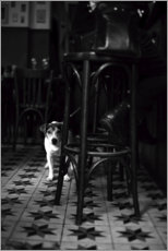 Foam board print  French bistro with a small dog - Carina Okula