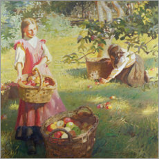 Acrylic print  Apples - Harold Harvey