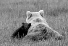 Premium poster Grizzly bear mom with child