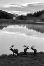 Wood print  Rocky Mountain National Park - Jaynes Gallery