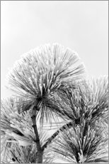 Canvas print  Pine branch with frost crystals - Adam Jones