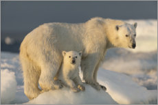 Premium poster Polar bear cub with mother