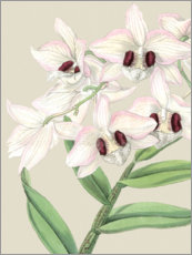 Premium poster Orchid blossom II