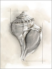 Acrylic print  Shell Schematic I - Megan Meagher