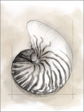 Acrylic print  Shell Schematic II - Megan Meagher