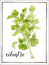 Premium poster Herbal illustration Cilantro