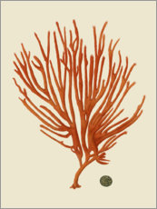 Wall sticker Red coral II