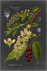 Wood print  Cherries - Vision Studio