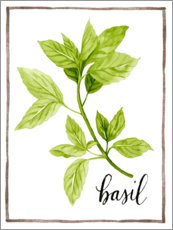 Premium poster Herbal illustration Basil