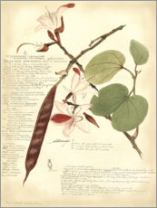 Gallery print  Botany III - A. Descubes