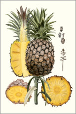 Canvas print  Pineapple Botanical Study II - Naomi McCavitt