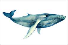 Gallery print  The Whales Song II - Grace Popp