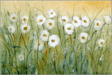 Canvas print  Daisies in spring II - Tim O'Toole