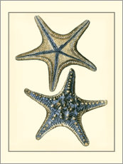 Acrylic print  Antique Blue Starfish II - Vision Studio