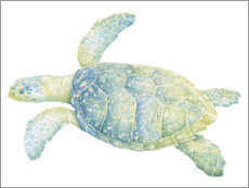 Acrylic print  Tranquil sea turtle - Megan Meagher