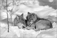 Canvas print  Wolves in winter - David & Micha Sheldon