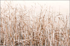 Premium poster Grasses in the snow