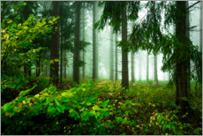 Gallery print  Green atmosphere in the cloud forest - Oliver Henze