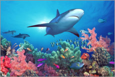 Canvas print  Shark under water