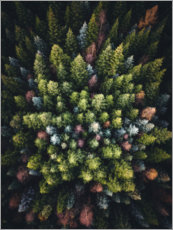 Foam board print  Colourful conifers from above - Lukas Saalfrank
