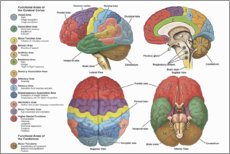 Canvas print  The Brain From 4 Perspectives