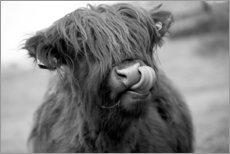 Wood print  Highland Cattle schwarz-weiß - John Short