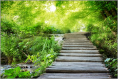 Premium poster  Wooden footbridge in the fairy forest - Dieter Meyrl