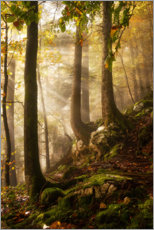 Canvas print  A day in the forest - Martin Podt