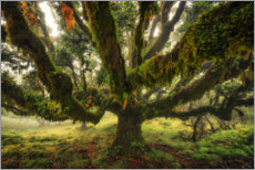 Canvas print  Octopus Tree - Martin Podt