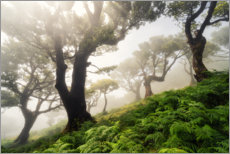 Wood print  Cloud forest in the morning - Martin Podt