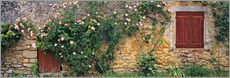 Gallery print  Climbing roses on old stone wall - Ric Ergenbright