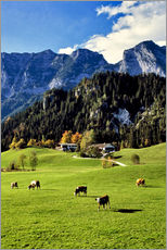 Gallery print  Alpine views with forest and pasture - Ric Ergenbright