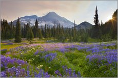 Wall sticker  Lupine meadow at sunrise - Gary Luhm