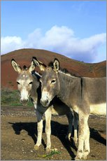 Wall sticker  Two friendly donkeys - Kevin Schafer