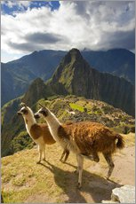 Wall Stickers  Llamas and a view of Machu Picchu - Howie Garber