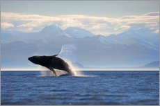 Wall sticker  Humpback whale jumps out of water - Paul Souders