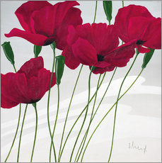 Wall sticker  Poppies swayed by the wind - Franz Heigl